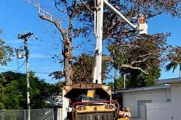florida keys tree service